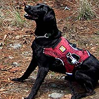 Canine Detectives in Lacandona Wilderness